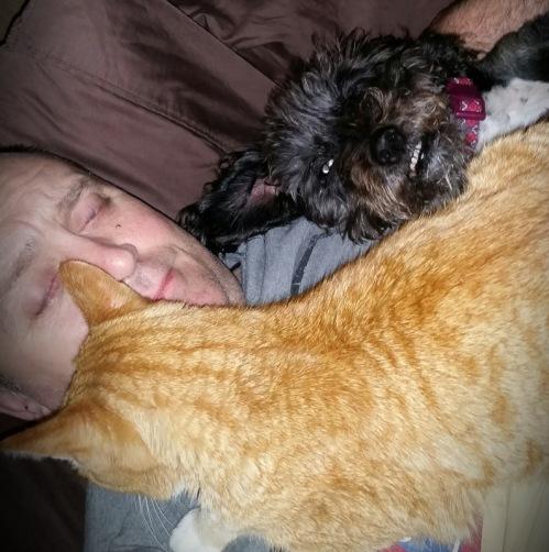 Pets (2)